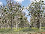 Иностранная недвижимость: природоохранный сертификат для проекта Silva Tree Princess
